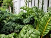 plant-diet