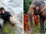Animals rescued